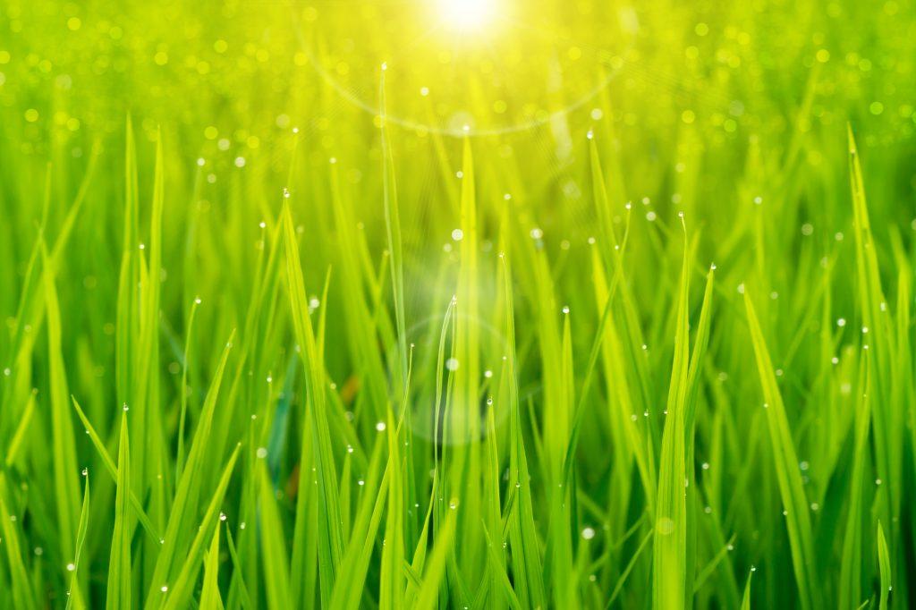 人気No.2は新緑を思わせる 「グリーン」系