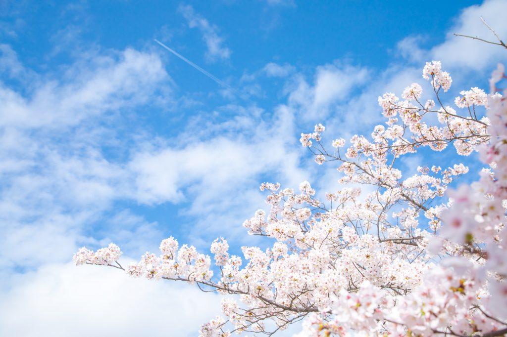 桜咲いたら1年生