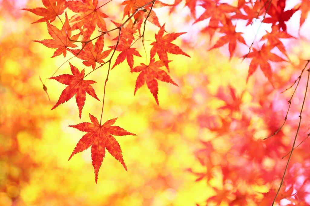 おしゃれの秋