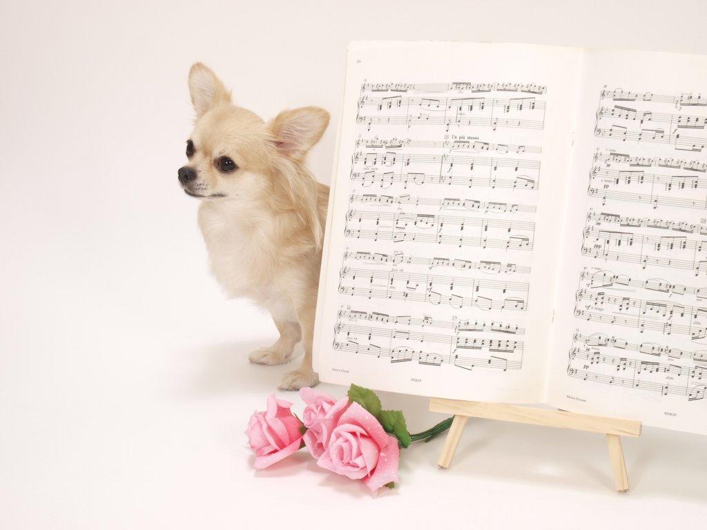 結婚式の余興で歌う曲の選び方