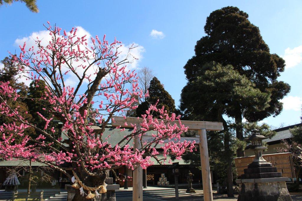 樹齢400年とも言われる射水神社の御神木